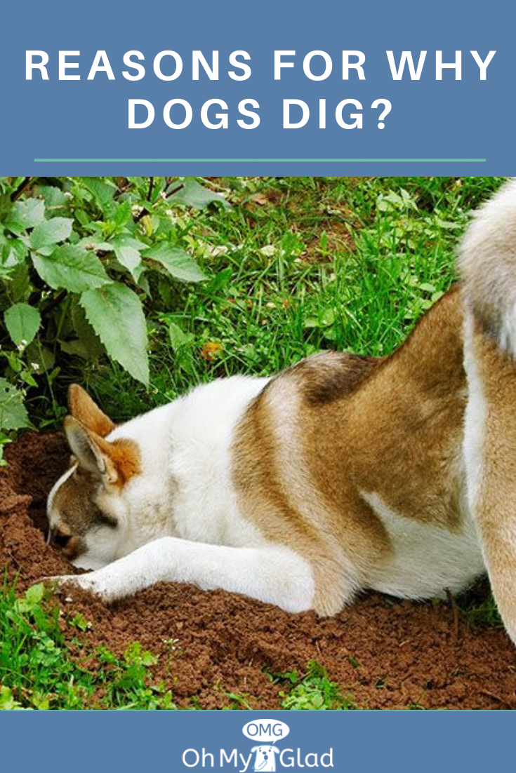 4da67ef0e25b8c634229a753b0e85e8d - How To Get Rid Of Dogs From Your Yard