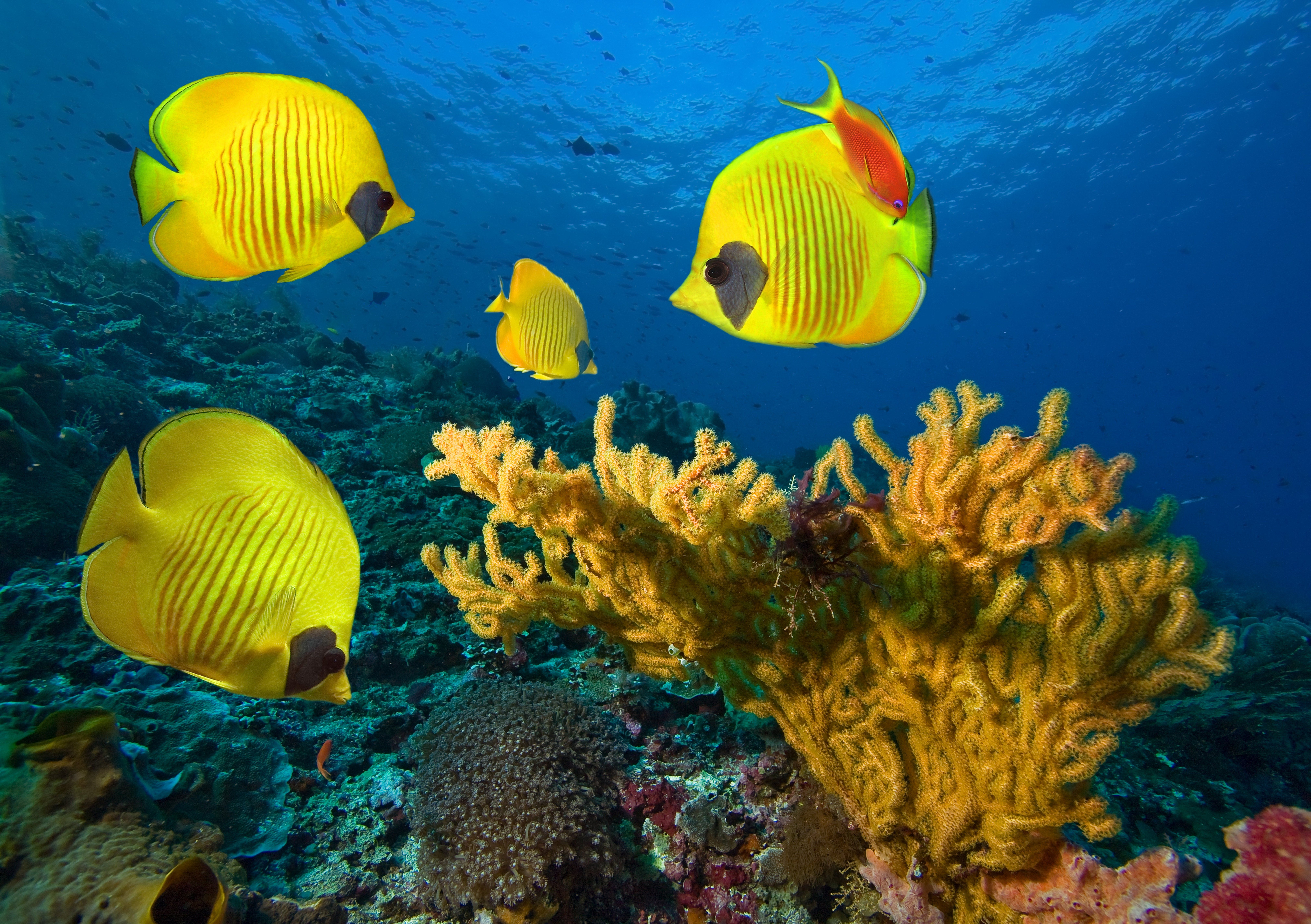 Underwater Fish Fishes Tropical Ocean Sea Reef Wallpaper 8088x5702 661461 Wallpaperup Underwater Fish Tropical Fish Pictures Yellow Fish