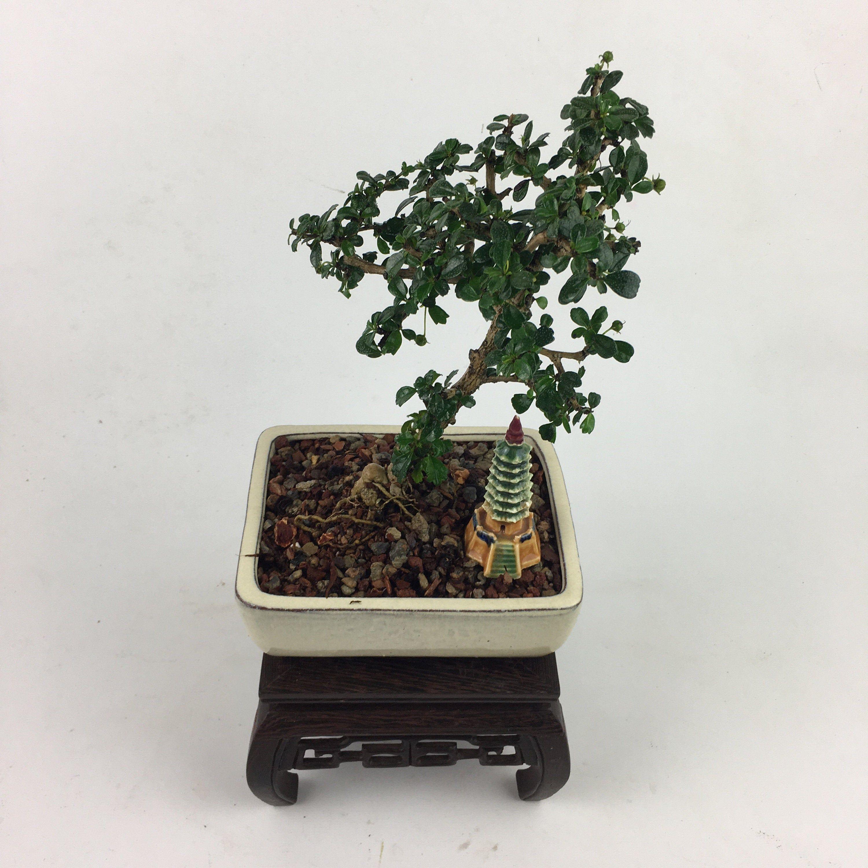 Pin On Elemental Bonsai Tea Garden