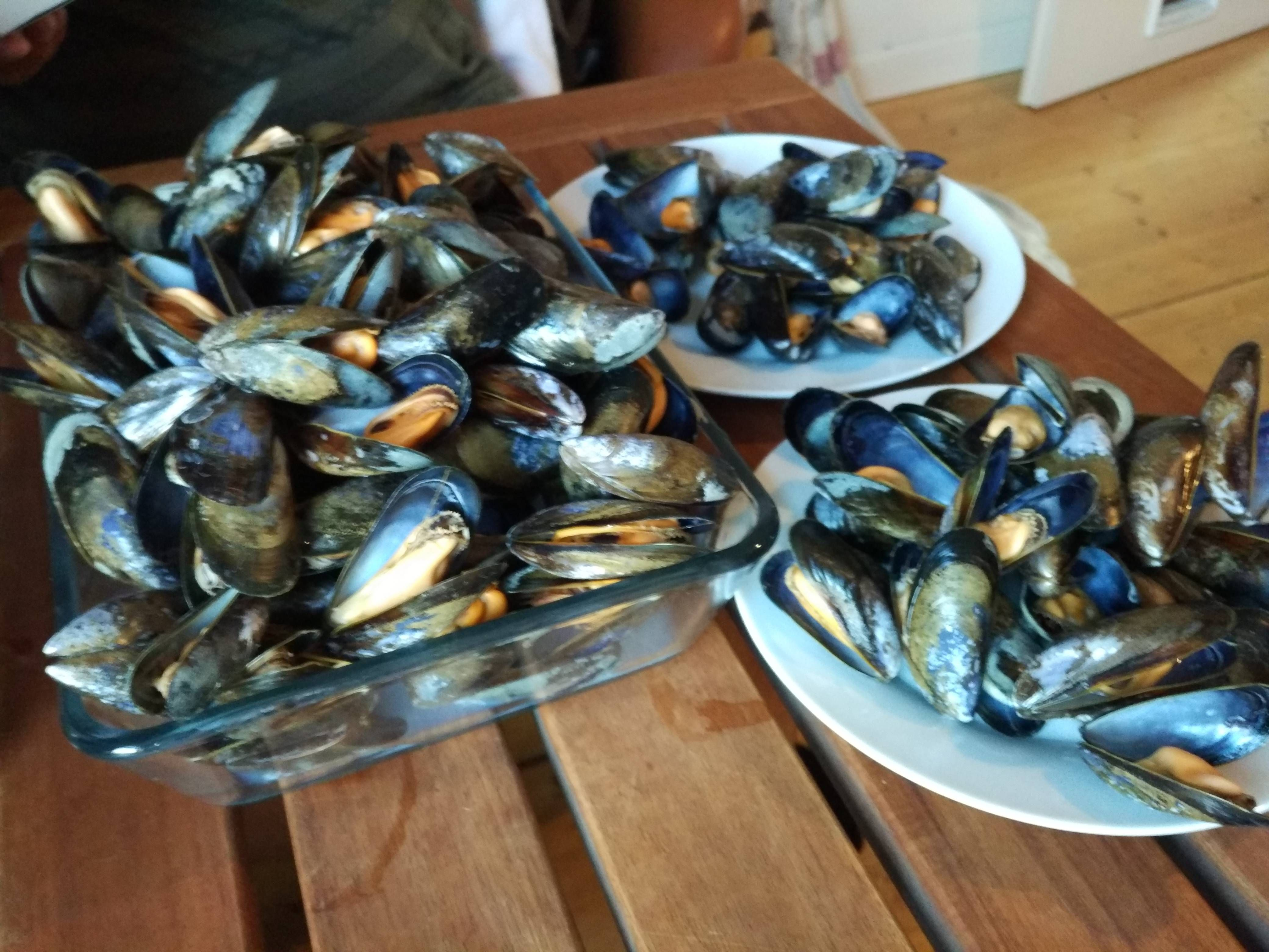 [Homemade] Steamed Mussels! #recipes #food #cooking #delicious #foodie #foodrecipes #cook #recipe #health