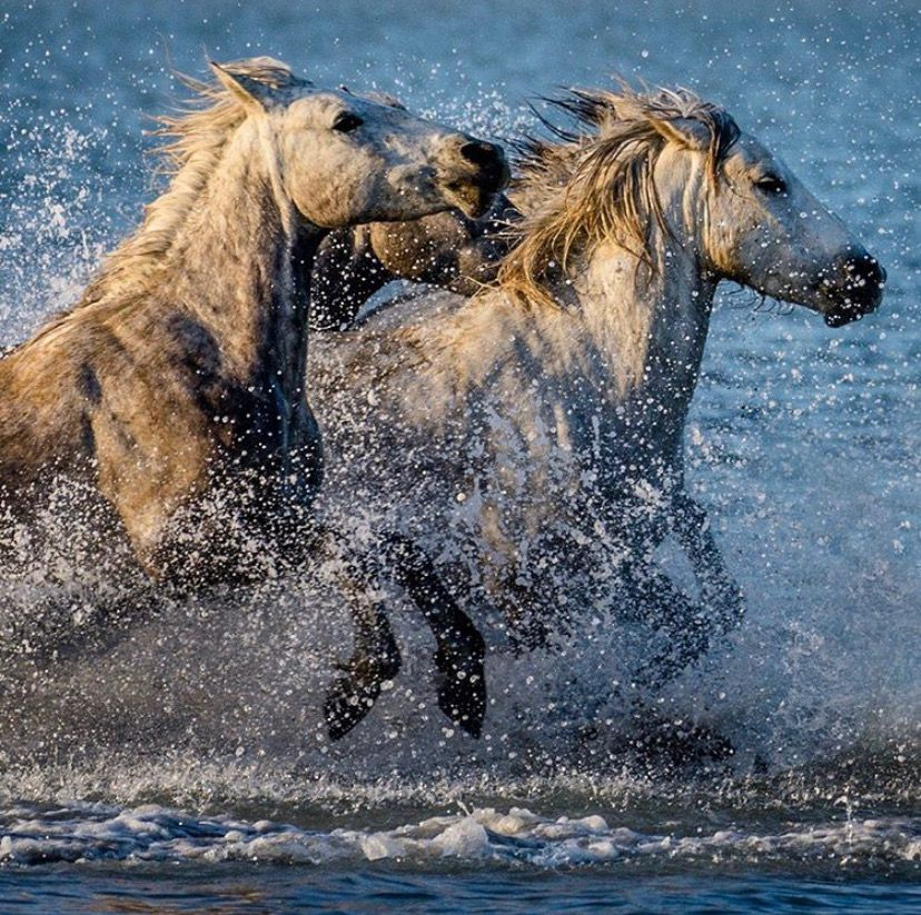 Pin By Zoska 45 On Horses Wild Horse Pictures Horses Beautiful Horses