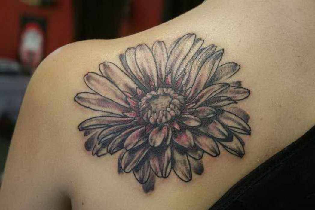 Gerber Daisy The Orchid Snatcher 5476283 Top Tattoos Ideas Aster Flower Tattoos Daisy Tattoo Designs Flower Tattoo Shoulder
