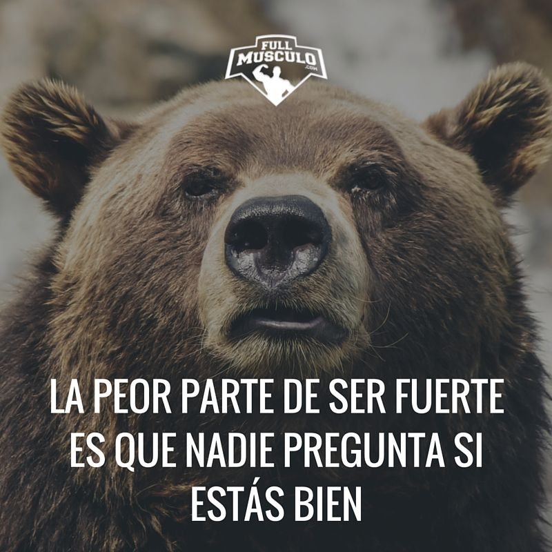 Ser Fuerte Tiene Sus Desventajas Fitness Motivation Tip Brown Bear Bear Pictures Bear