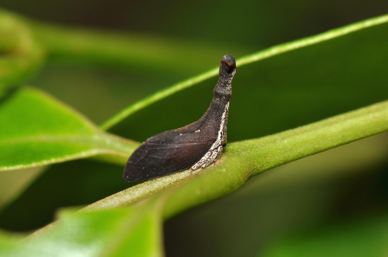 Обои насекомое, паук, лист. Макро foto 3