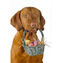 Make Your Dog An Easter Basket Your Dog Easter Baskets Pet Holiday