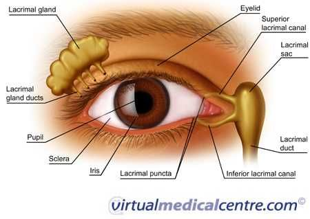 lacrimal apparatus #anatomy Anatomy  Physiology Pinterest