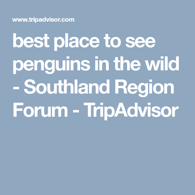 best place to see penguins in the wild - Southland Region Forum - TripAdvisor