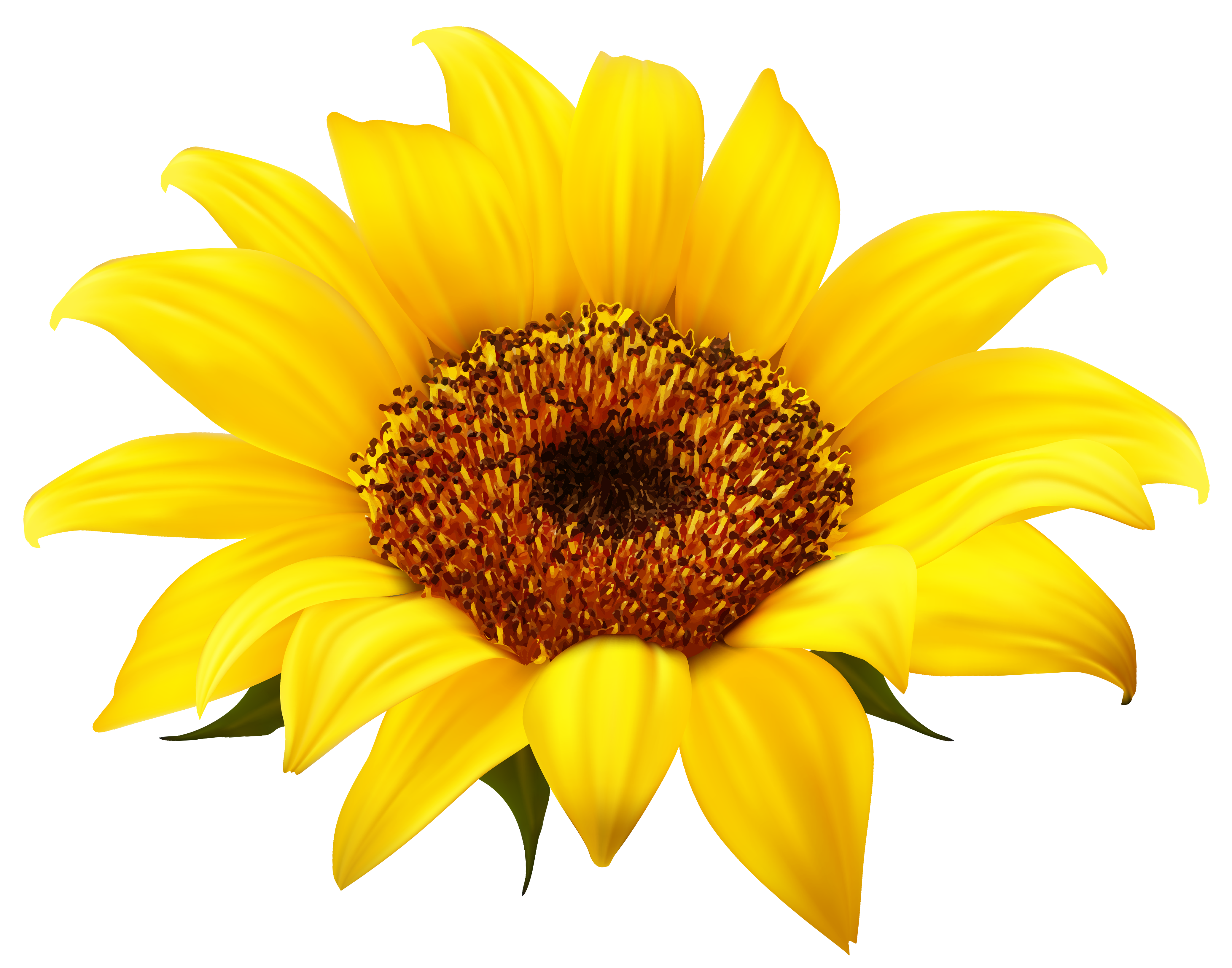Pin by Durgesh Pandey on Download Sunflower clipart