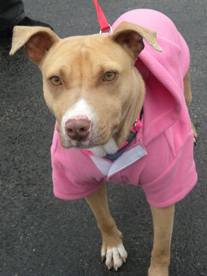Adopt ABBY DARLING on Petfinder Dog adoption, Terrier