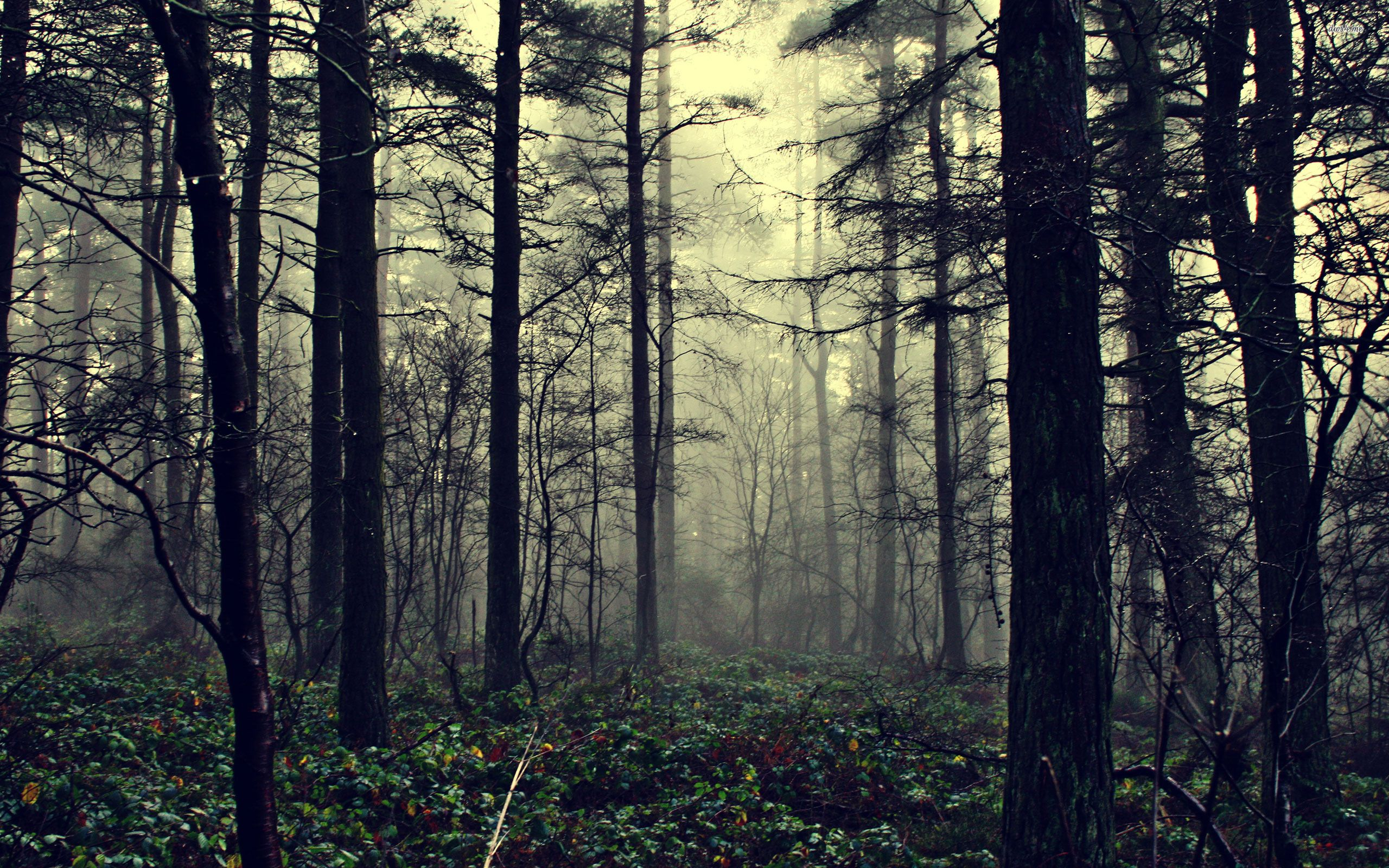 hd desktop a· forest background
