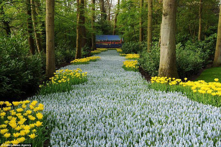 artigo 2314027 19753A18000005DC 79 964x639 belo jardim de flores Netherland