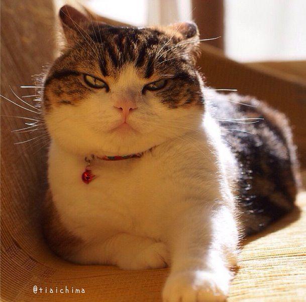 tiaichima  うわ〜っこんな悪い顔したギーギー、見たことないんですけどぉ Giee Giee is not angry.┐(´ー`)┌ #ギーギー #まんじゅう部
