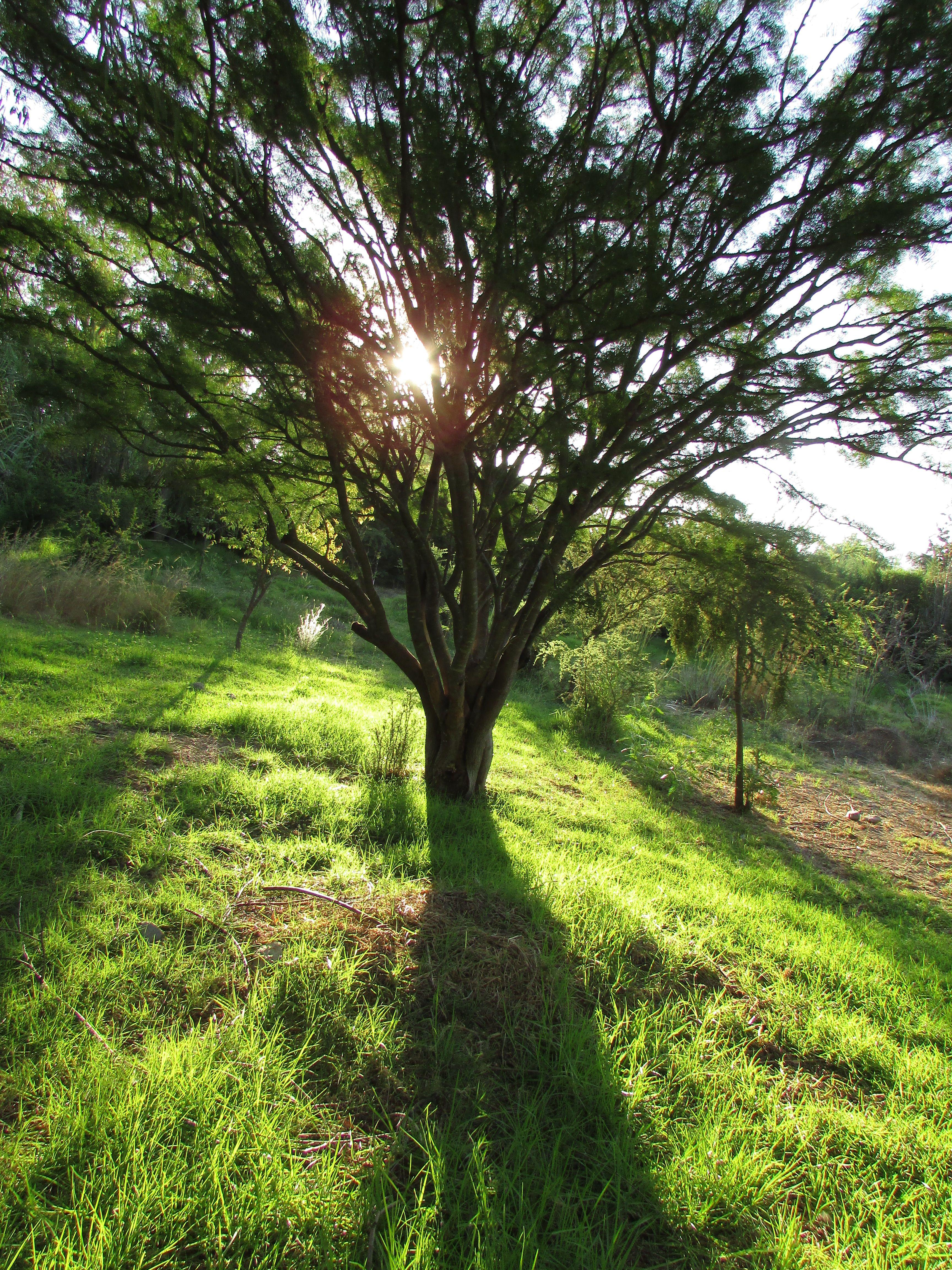 La generosa sombra de un árbol.