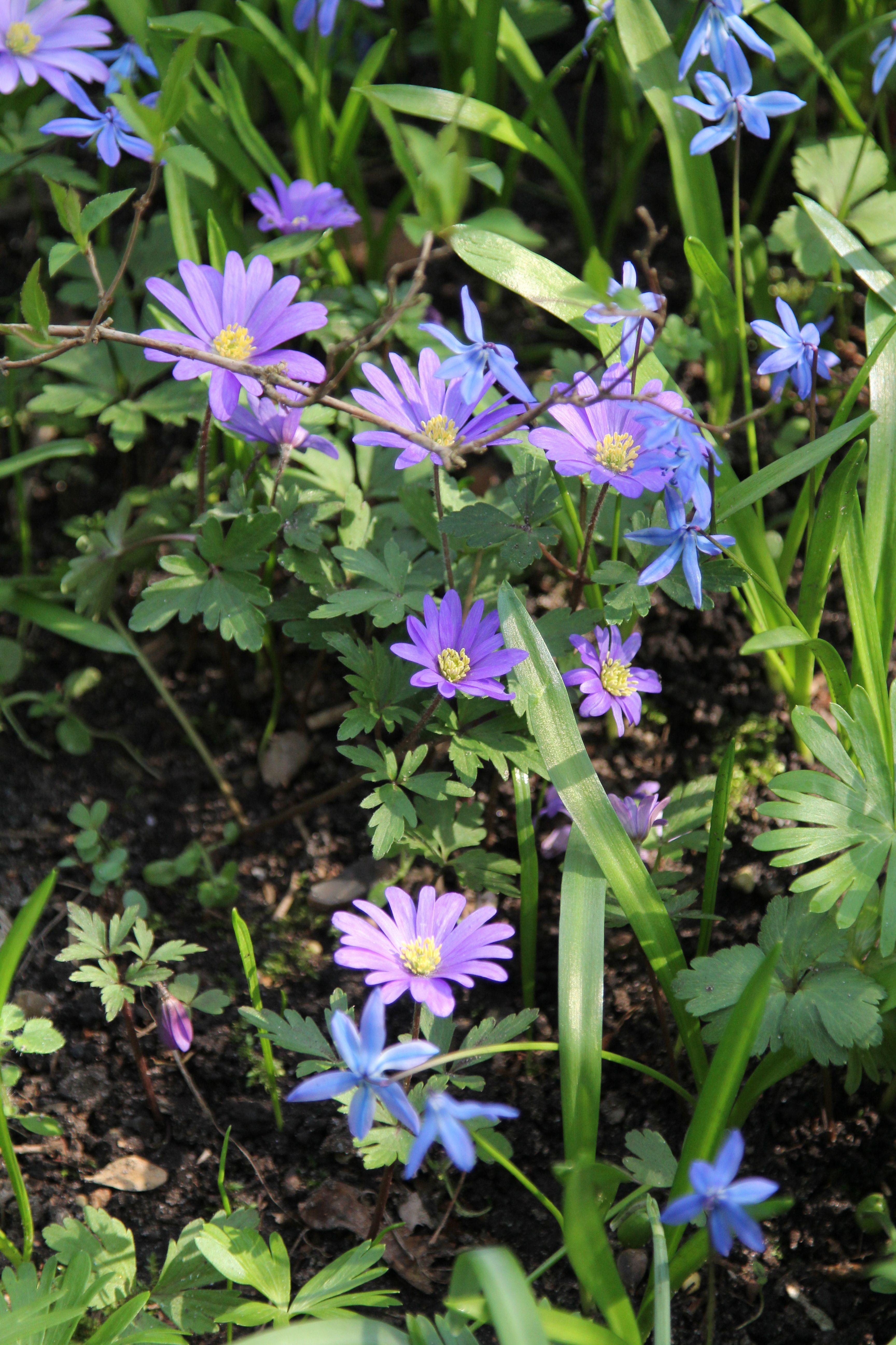Garten Beet Fruhling April Bluhen Garten Pflanzen Gartentipps