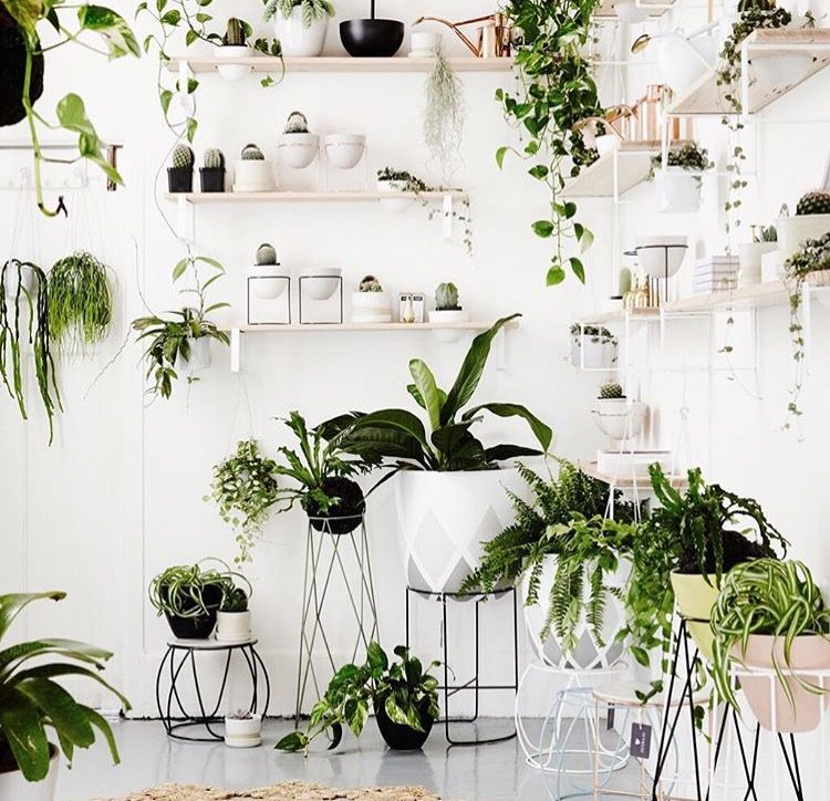 Wonderful Discover Ideas About Indoor Plants