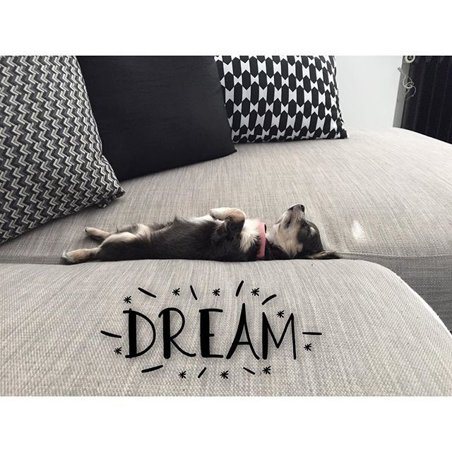 """""""Näillä lämpötiloilla pitää osata ottaa rennosti, ainakin Napin mielestä  #chihuahua#chihu#puppy#cute#dream#relax#lazyday#chill"""" Photo taken by @teamfitjohanna on Instagram, pinned via the InstaPin iOS App! http://www.instapinapp.com (07/03/2015)"""