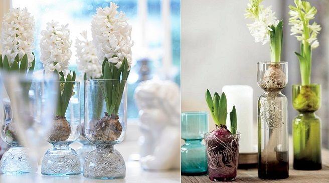 best 25+ bulbos de tulipan ideas on pinterest   bulbos de