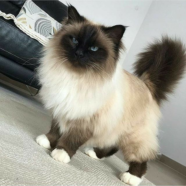 Pinterest whywhyn0t Cute cats, Beautiful cats, Cats