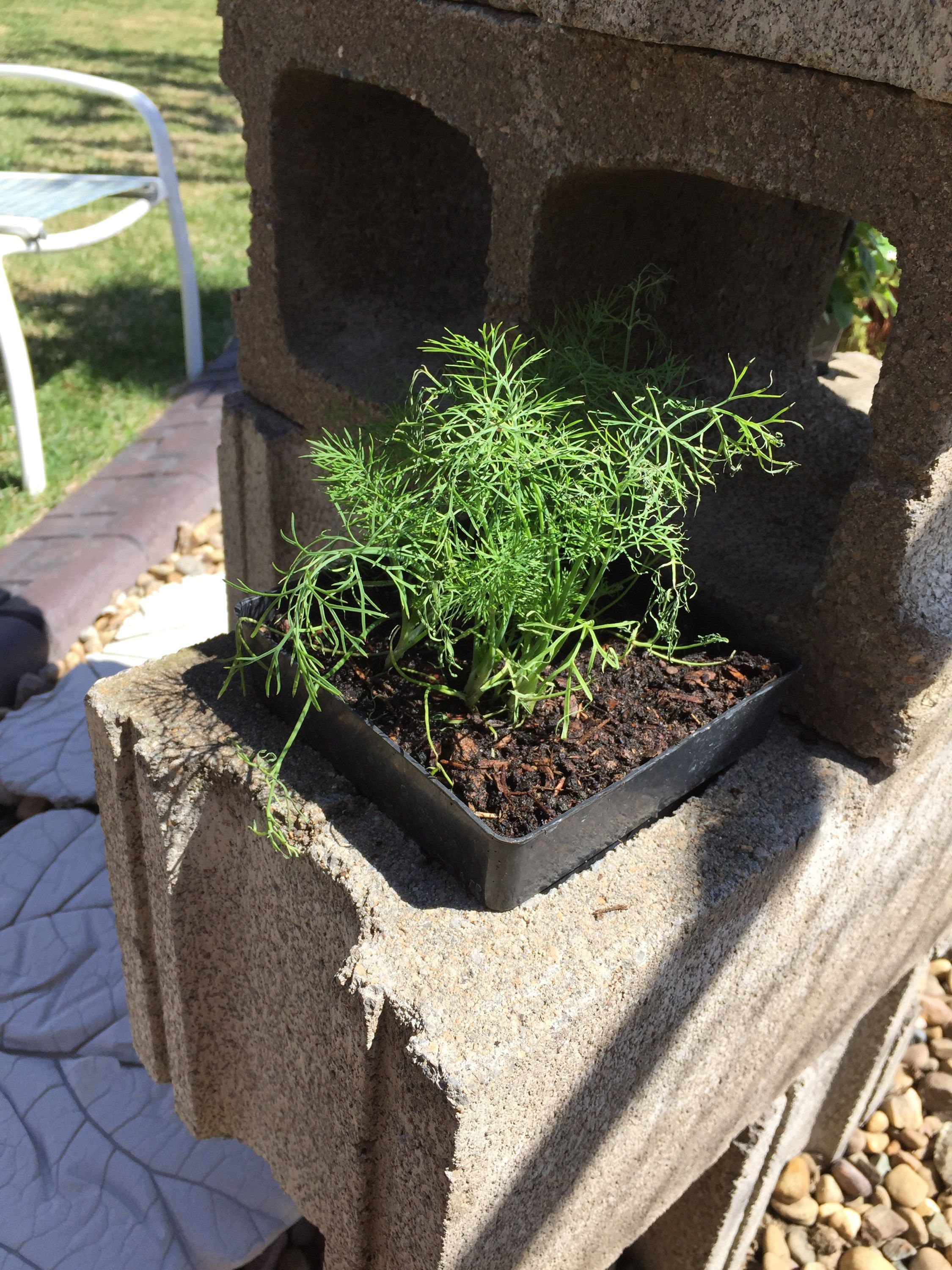 Learn to make an easy herb garden using only cinder blocks!