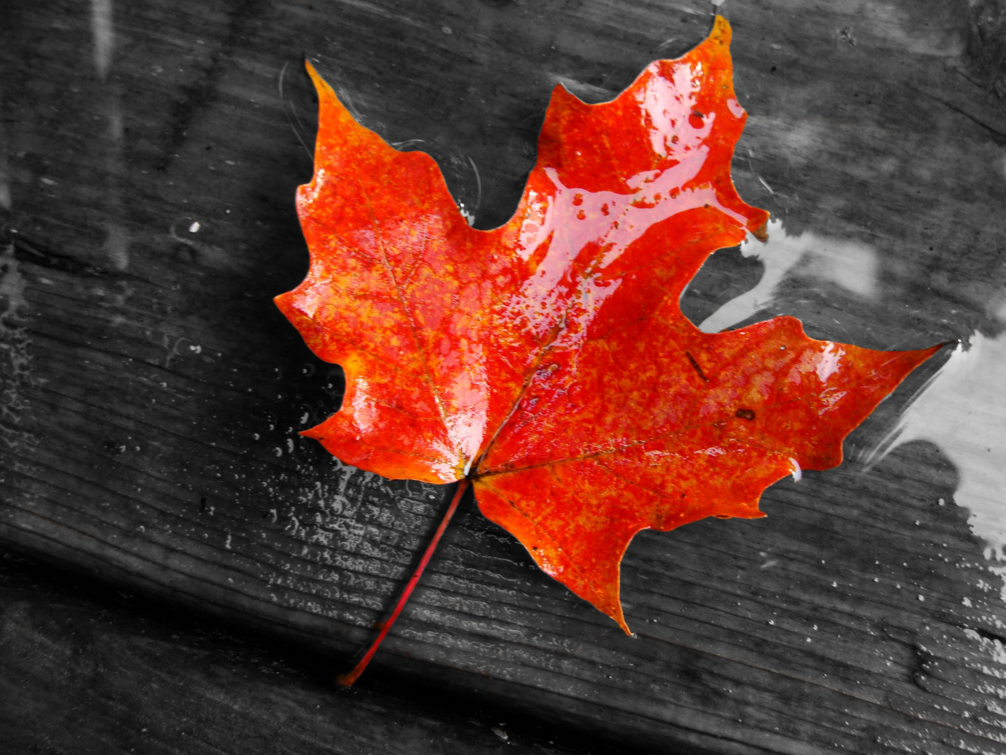 Red Leaves Wallpapers Wallpaper