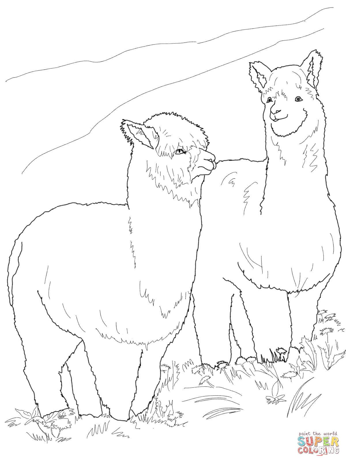 Two Hairy Alpacas   Super Coloring   Animal coloring pages ...