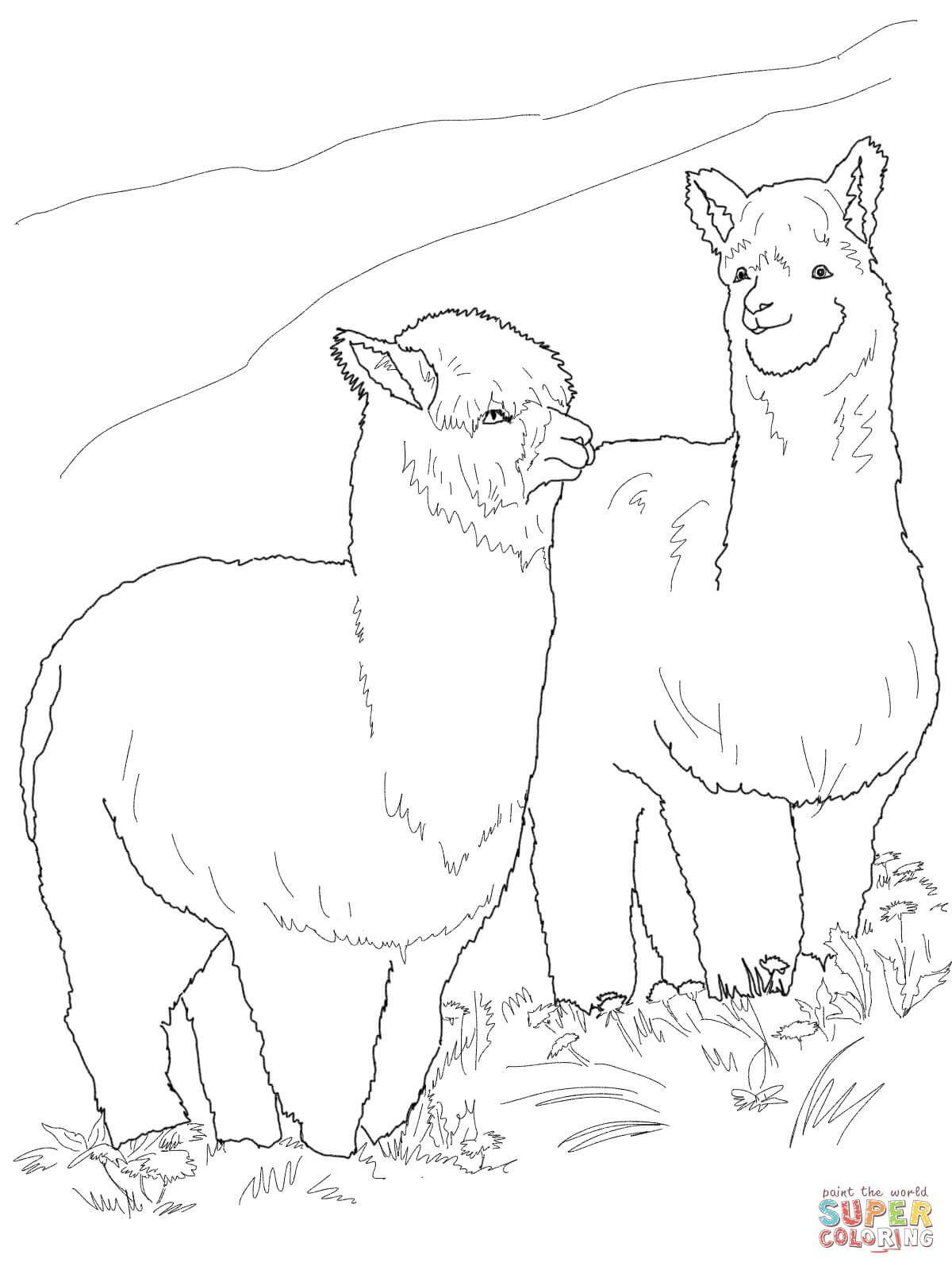Two Hairy Alpacas Super Coloring Ausmalbilder Alpaka Ausmalen