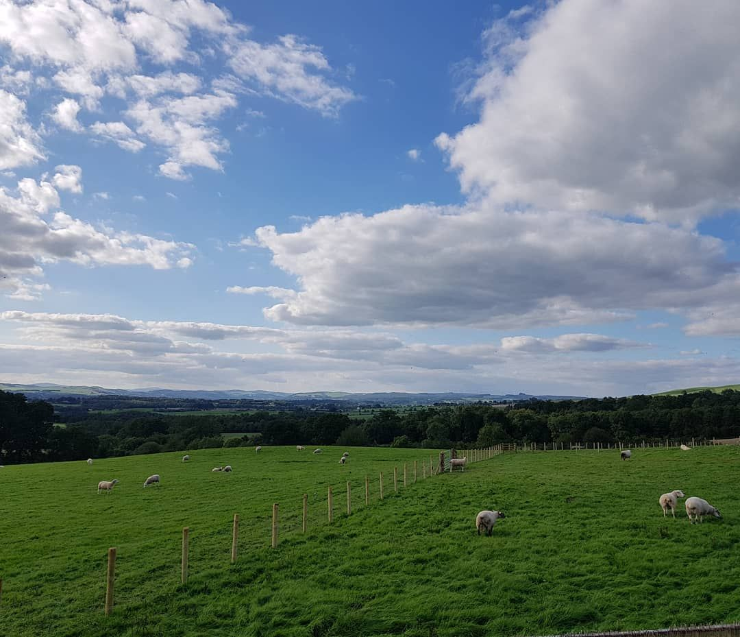 Mybackdoor Today Hello Sheep View Views Landscape Home Dumfries Countryside Countryliving Countrylife Farm Farmlife Scotla Landscape Farm Life Countryside