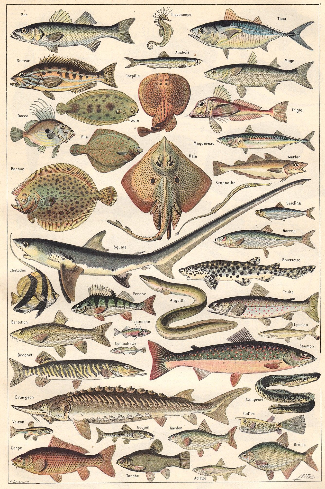 Poissons 1 Com Imagens Criaturas Marinhas Animais Marinhos