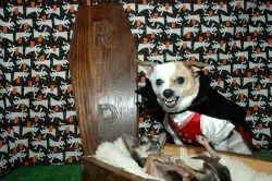 Perro en Halloween
