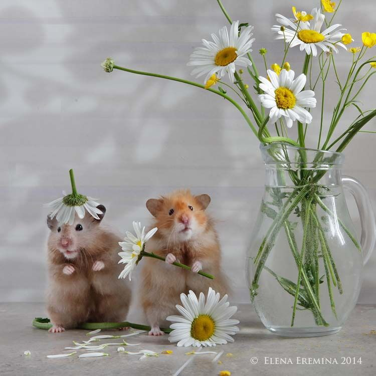 floral artists by Elena Eremina on 500px