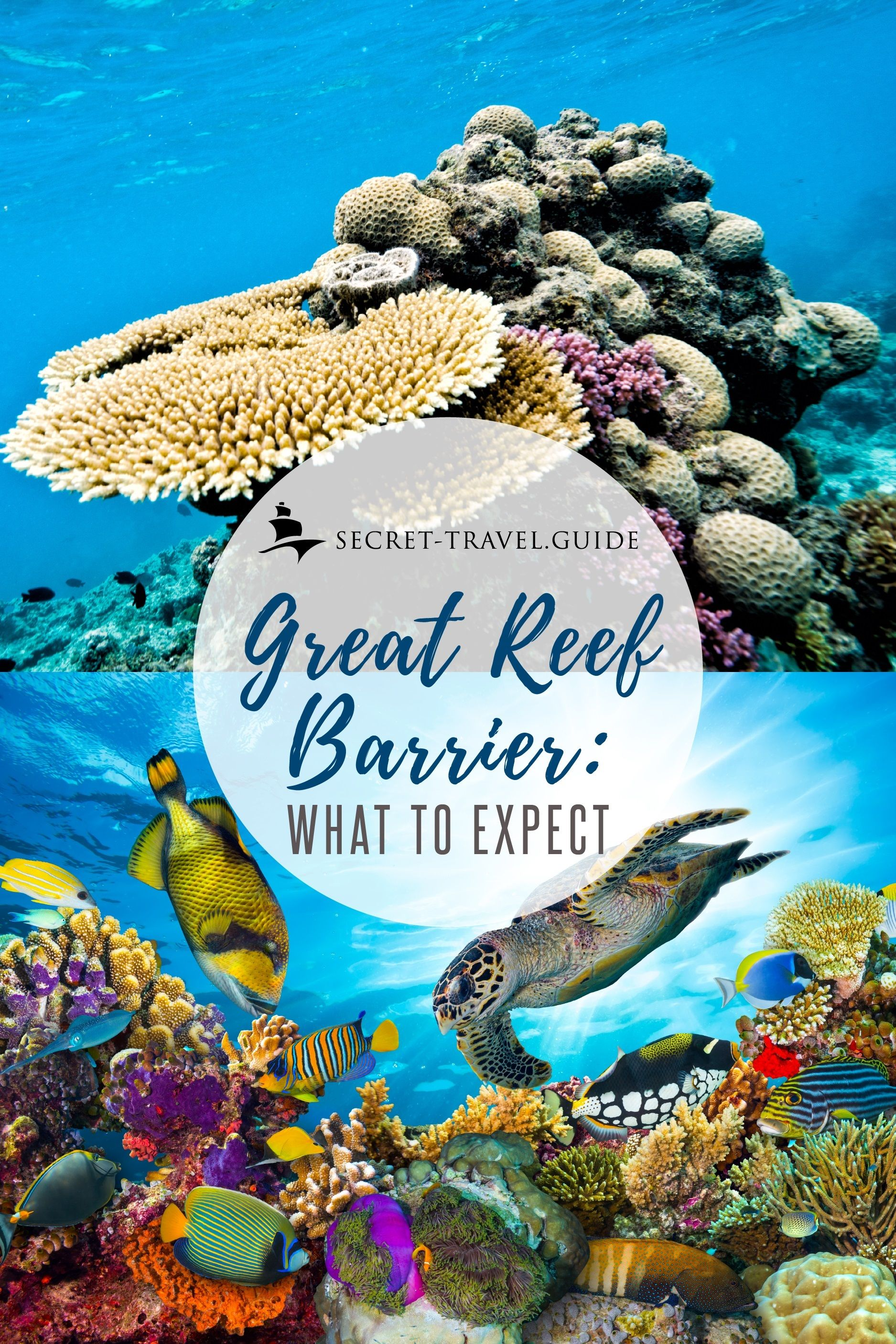 An Insight Into The Great Barrier Reef Australia Secret Travel Guide Barrier Reef Australia Great Barrier Reef Diving Great Barrier Reef Snorkeling