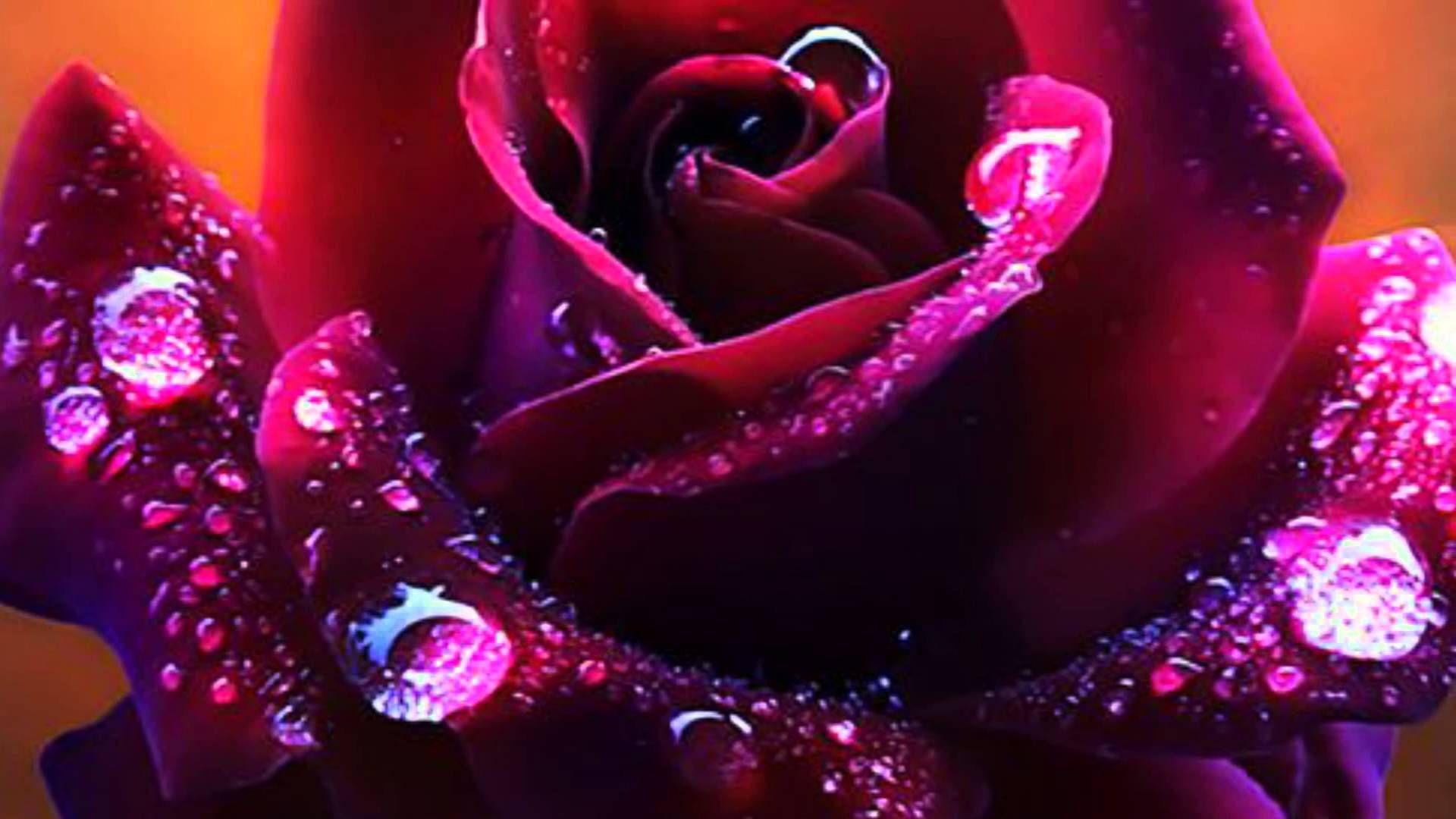 Samye Krasivye Cvety I Muzyka Dlya Moih Druzej Purple Roses Amazing Flowers Beautiful Roses