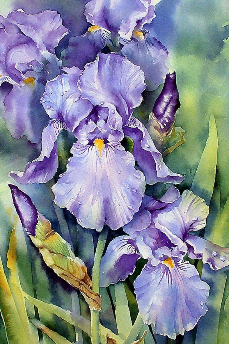 Ann Mortimer (b. 1960) — Dewdrop Irises (800x1202) Iris
