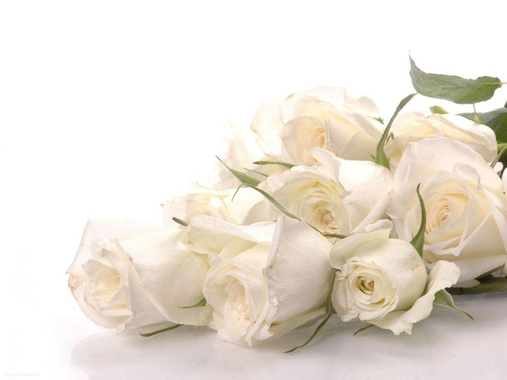 White Roses Ch 24 White Roses Beautiful Wedding Flowers White Roses Wallpaper