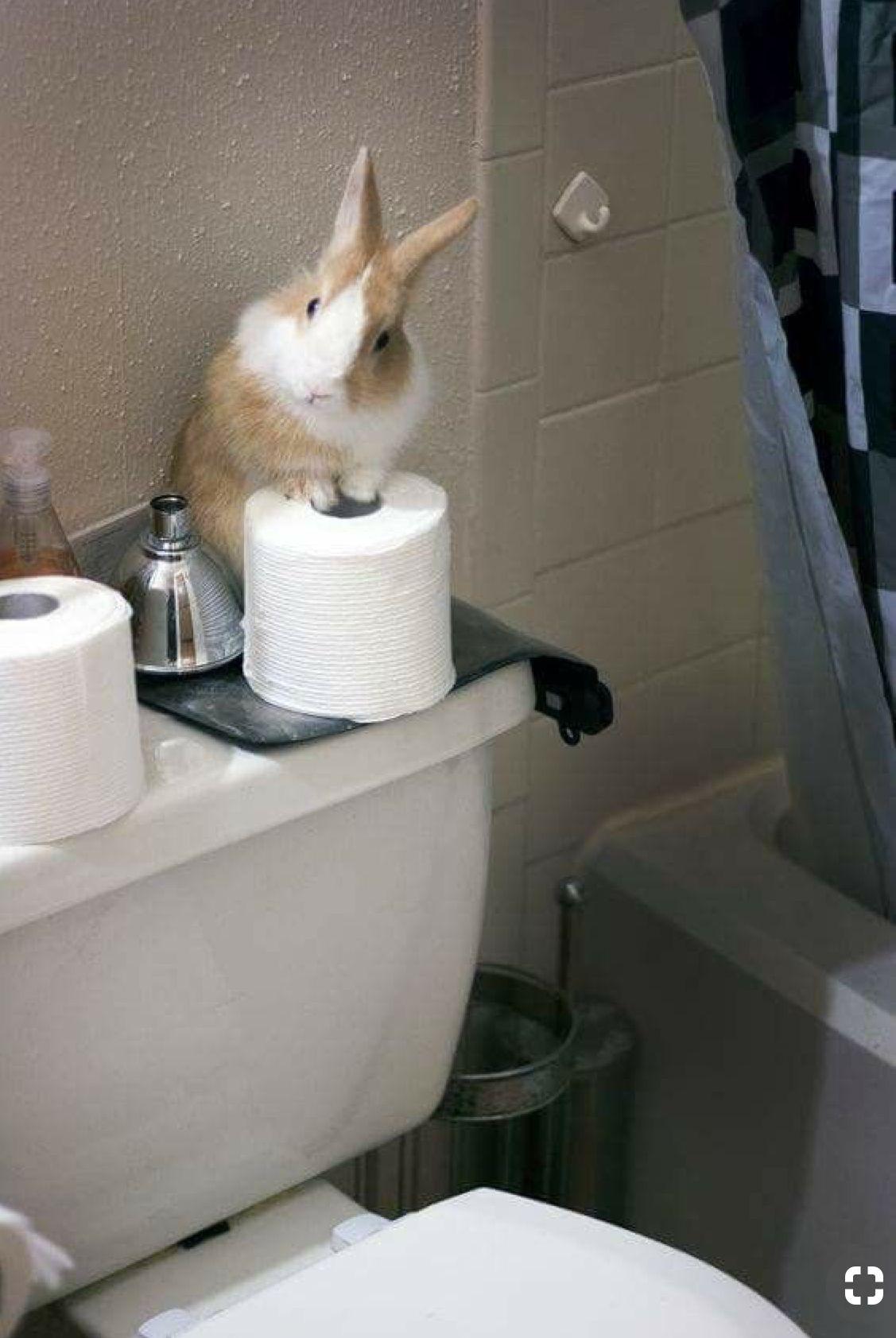 Cutest Bathroom Attendant Cute Baby Bunnies Pet Bunny Bunny Lovers