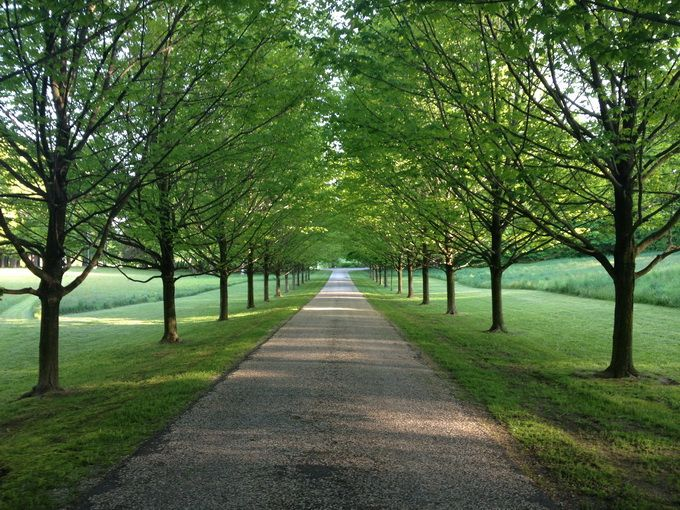 Driveway Lined With Trees Driveway Landscaping Farm Landscaping Tree Lined Driveway