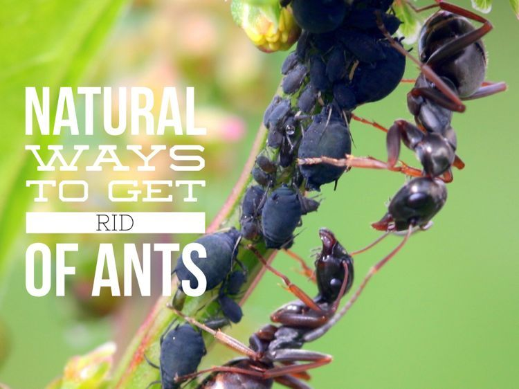 Ants are an awful problem in the garden but just one