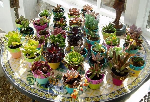 are the sunshine in my garden of life!  Also... How about that gorgeous table top garden!?   #Iheartsucculents