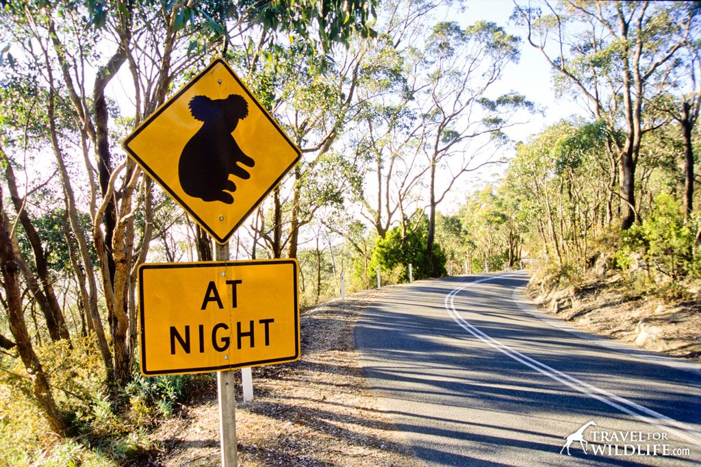 An guy likes you signs australian Real Ways