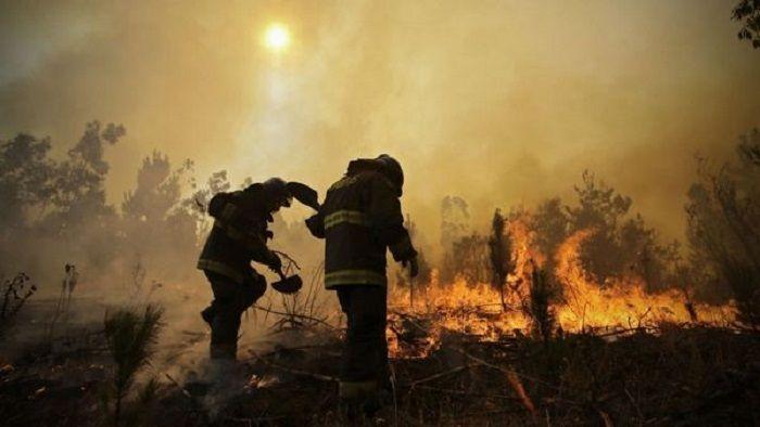 6 muertos en los peores incendios forestales en la historia de Chile: La presidenta del país trasandino Michele Bachelet lo decretó tras…