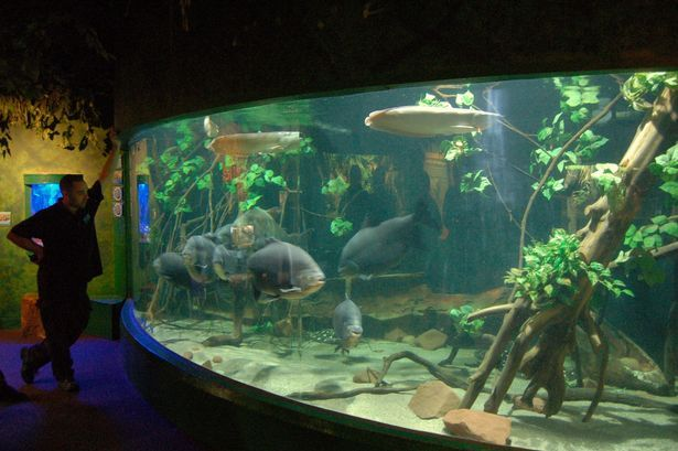 Flooded Forest Display at Blue Planet Aquarium