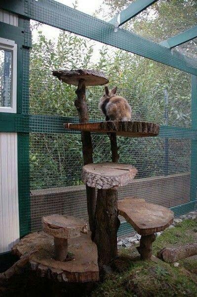 arbre a chat pour lapin
