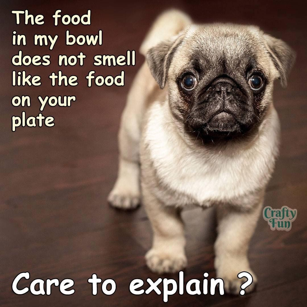 Pin By April Addington On Join The Pugs Friends Puppy Training