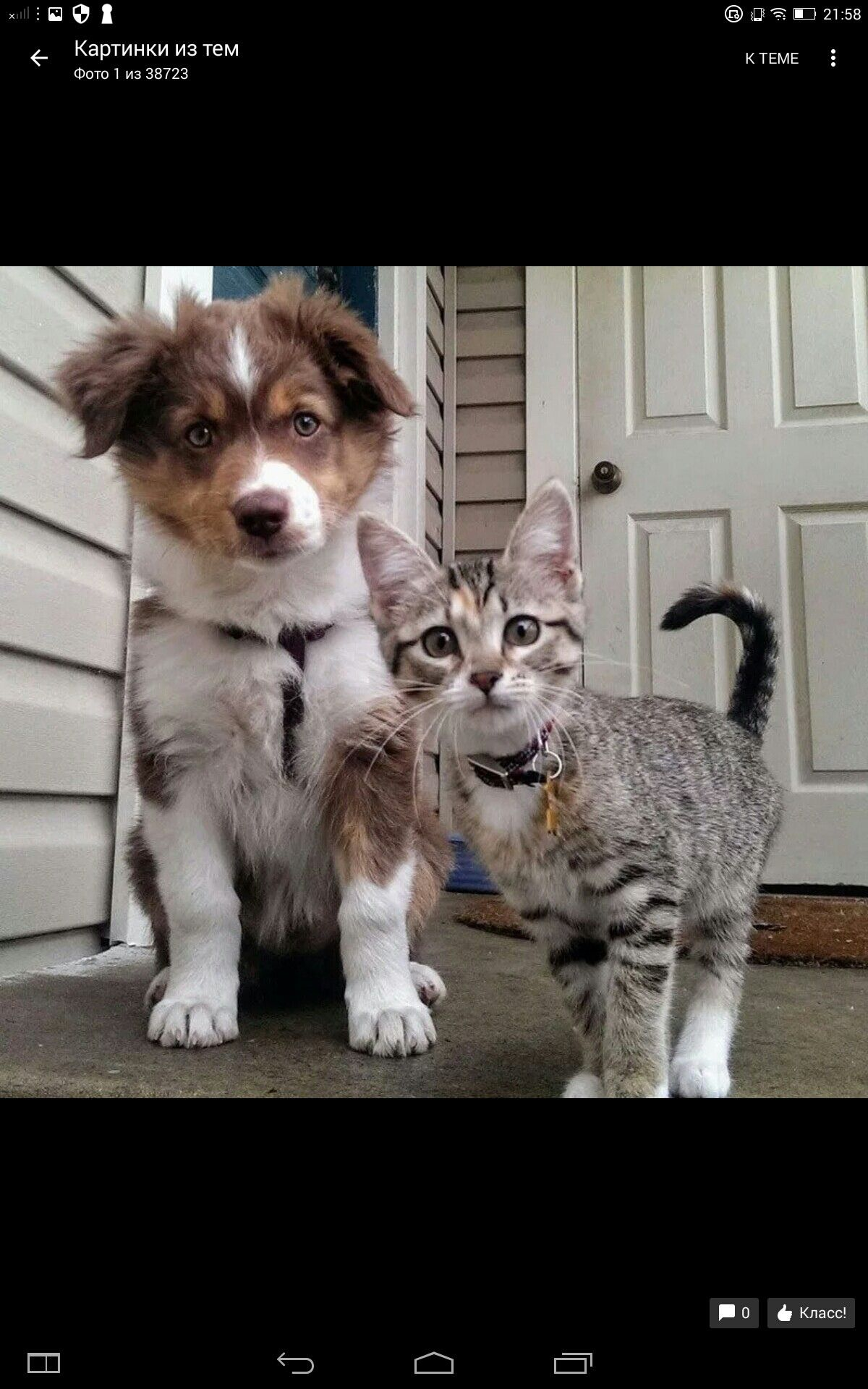 Pin By Tefi Os On Cats And Others Cute Animals Animals Friends Cute Dogs