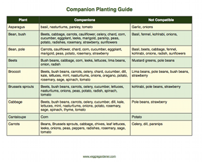 The Companion Planting Guide Gives Information On Which Vegetables