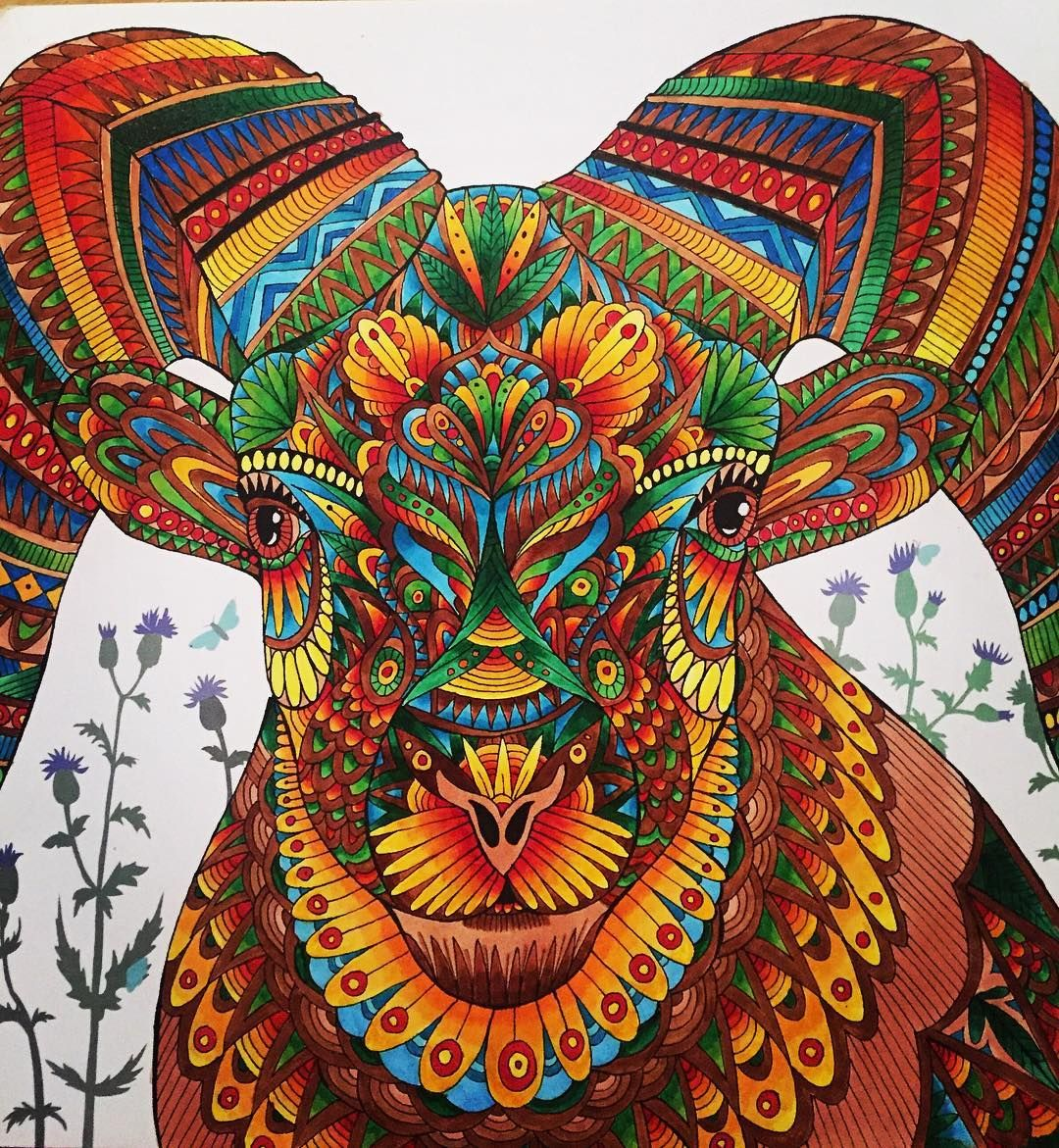 Hayley Gilbert On Instagram Big Horn Sheep Themenagerie Bighornsheep Adultcolouring C Animal Coloring Books Millie Marotta Coloring Book Color Pencil Art