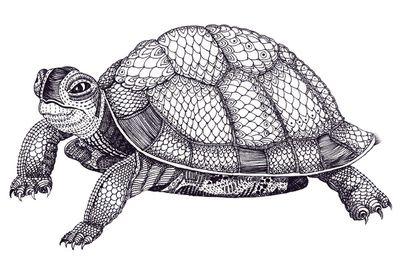 Turtle Pattern Art Print Pattern Art Turtle Pattern Turtle