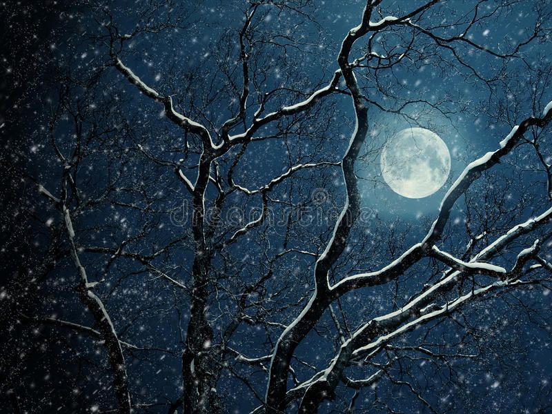 Moon. The full bright moon. a dry tree on a background of light of the moon ,