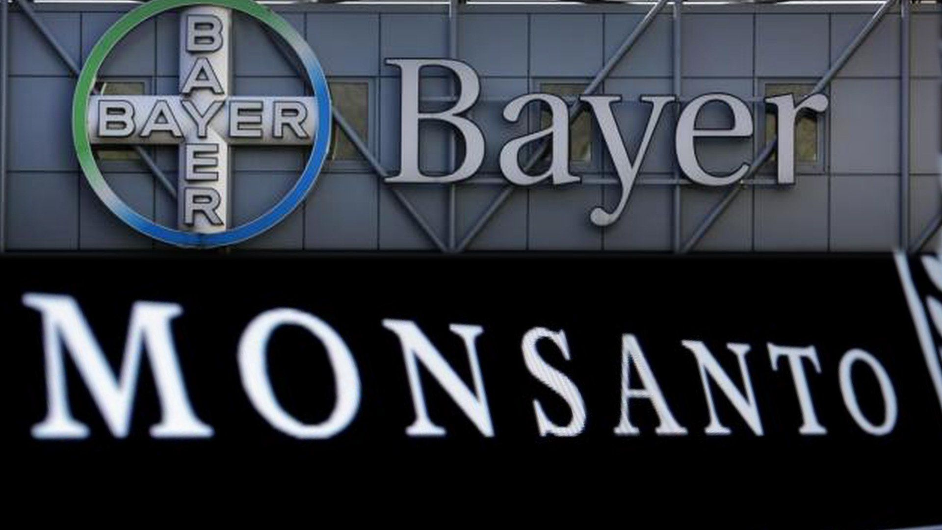 "Democracy Now! on Twitter: ""Bayer Takes Over Monsanto, Creating Largest Seed Supplier in World https://t.co/IlTxEWfdli https://t.co/QCxdvhtS7V"""