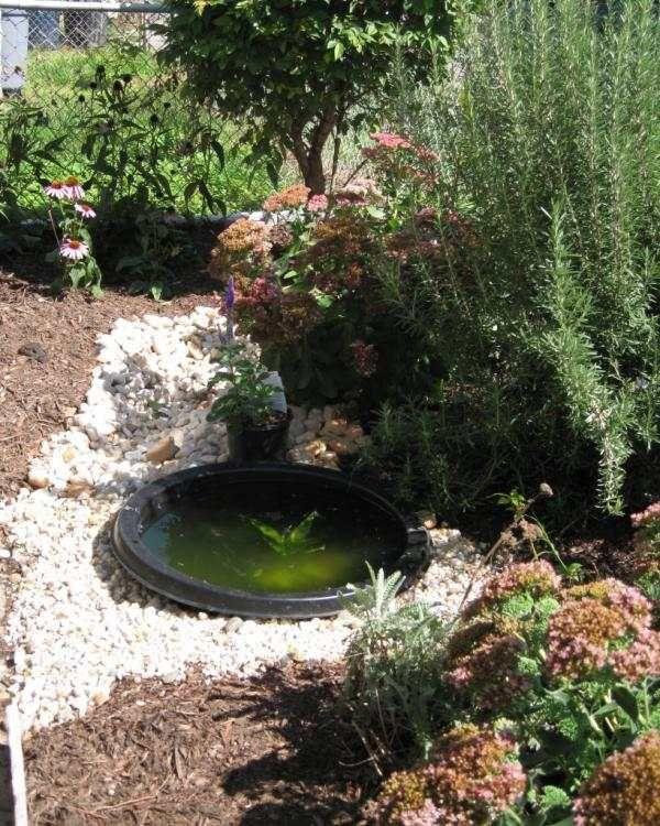 Einen Mini Gartenteich anlegen | Ratgeber Garten